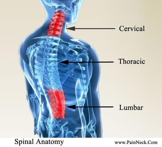 Pain Neck Back - Back and Neck Pain Together