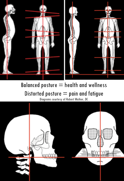 body jaw natural alignment diagram by the holistic mouth doctor felix ...
