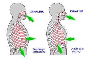 Breathing is often dysfunctional causing neck and back pain