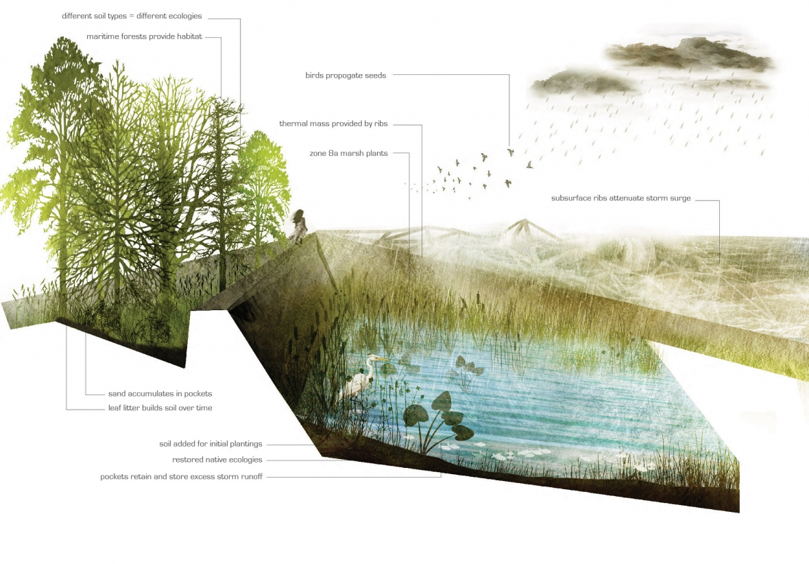 landscape diagram landscape design landscape architecture section ...