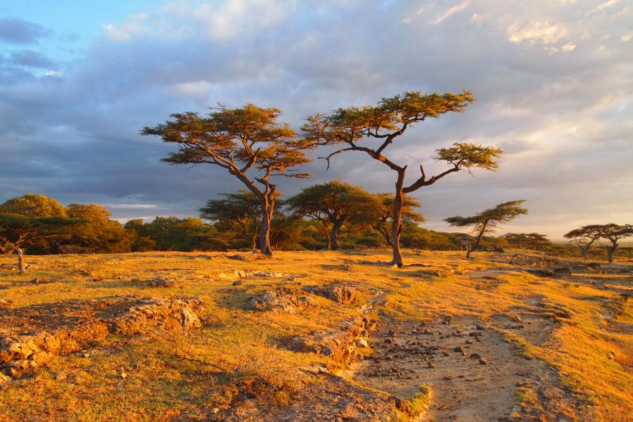 African Landscape - Trees - Pinterest - Landscapes, Africa and ...
