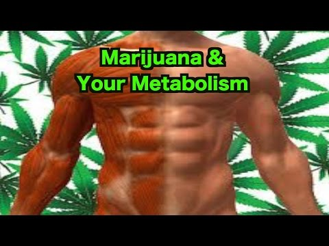 Marijuana & Your Metabolism