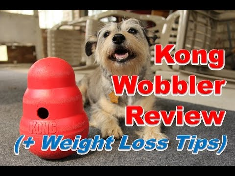 Kong Wobbler Review (+ Dog Weight Loss Tips)